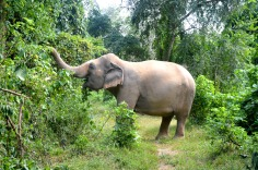 Kanchanburi: Elephant Nature Park