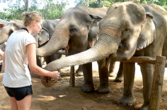 Kanchanburi: Elephant Nature Park - feeding elephants