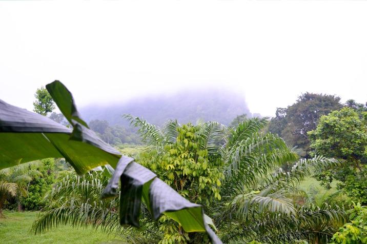 Khao Sok: Window view (Good View Resort), morning mist