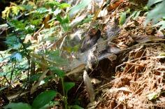 Khao Sok National Park: spider