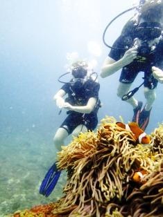 Phuket, Racha Yai Bungalow Bay - scuba diving - Nemo, Ocellaris