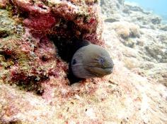 Scuba diving - Racha Noi and Racha Yai - Moray eel fish