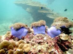 Scuba diving - Racha Noi and Racha Yai