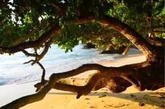 Similan Islands: Ko Miang - small beach