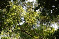 Similan Islands: Ko Miang - bats